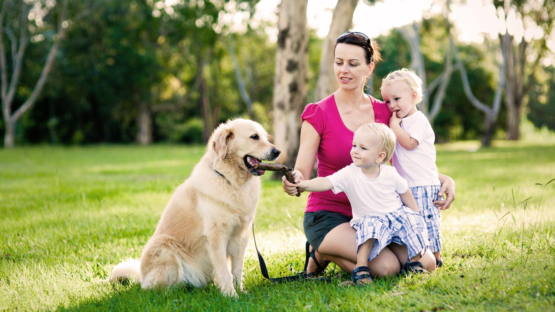 Famille et labrador