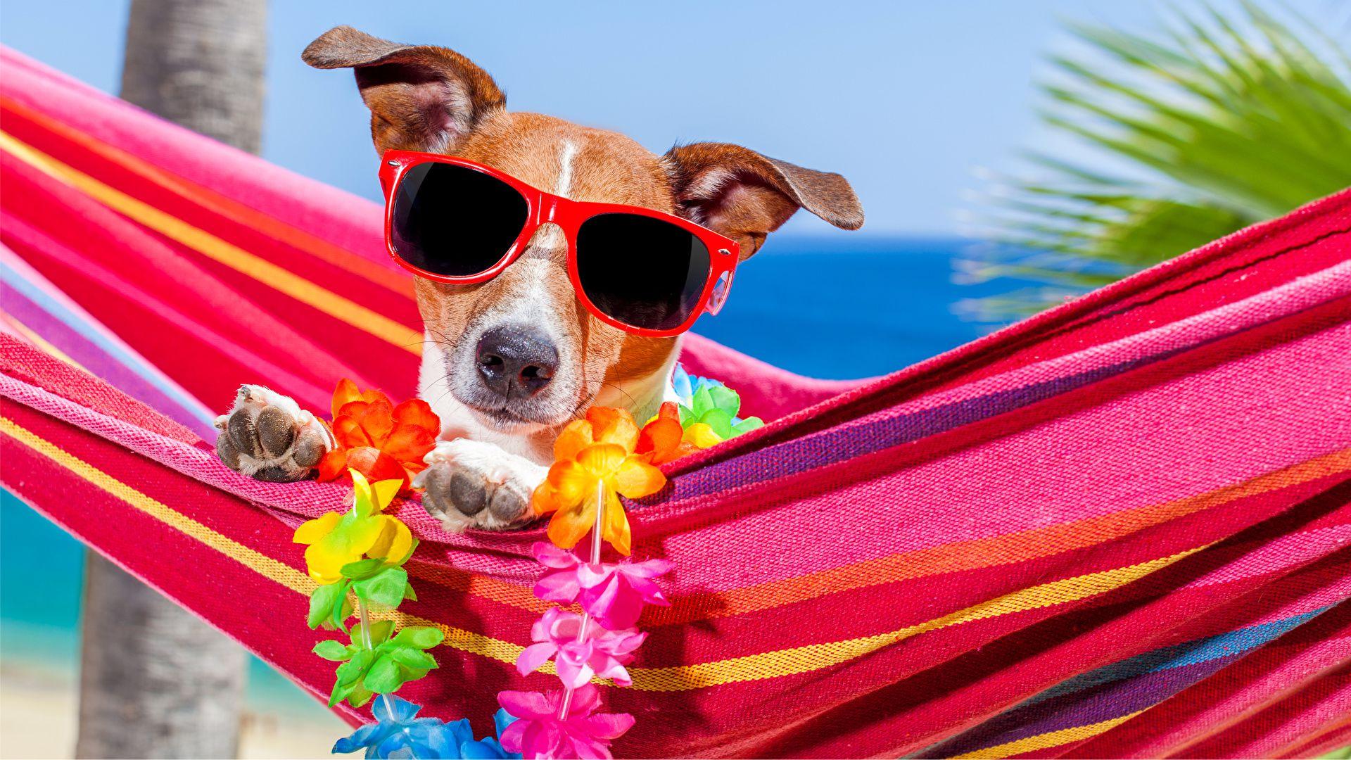 chien en vacances