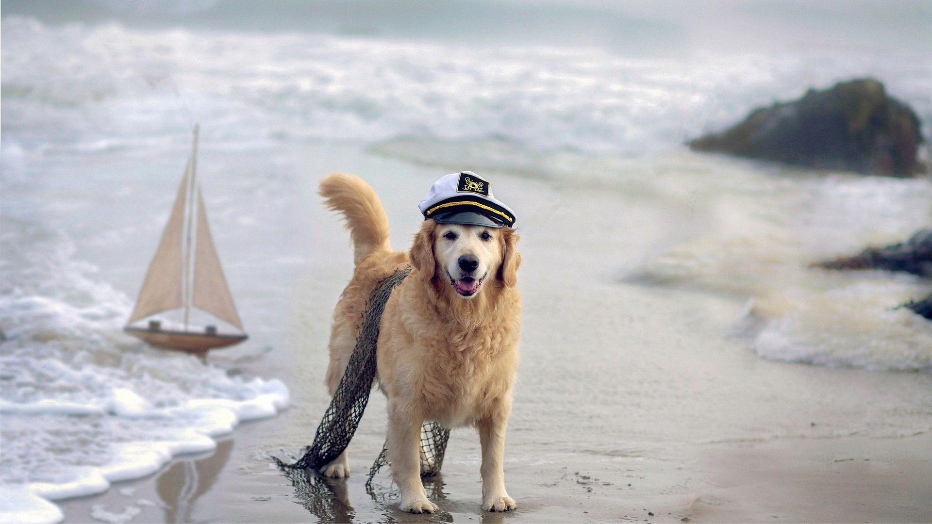Chien à la mer